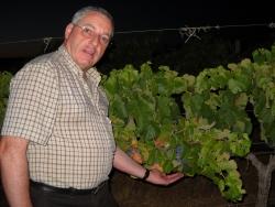Contributo da formação em Enologia para o setor vitivinícola