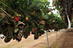 """""""Famalicão Bio Capital"""" vai promover a agricultura biológica"""